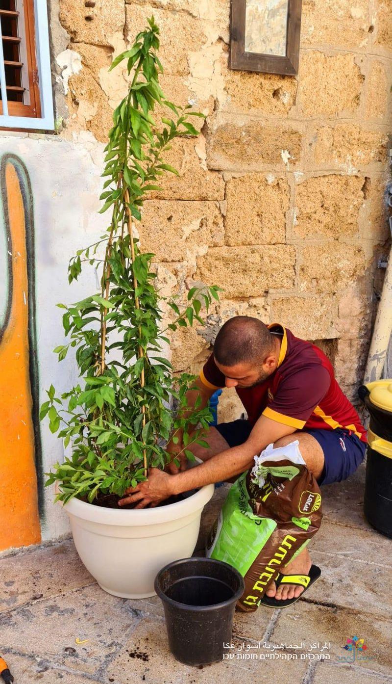 المراكز الجماهيرية- أسوار عكا مستمرة بمشروع حارتي بيتي، وتزيين حارة الشيخ عبد الله بالورد والأشجار